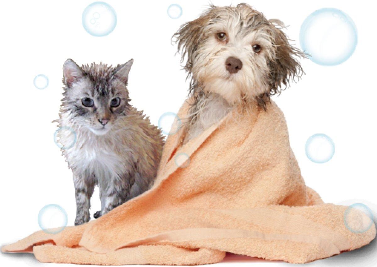 [Banho completo e saudável para cães e gatos]