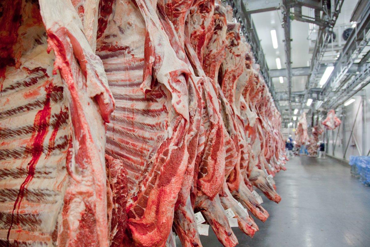 [Exportações de carne bovina cresceram 45% em novembro]