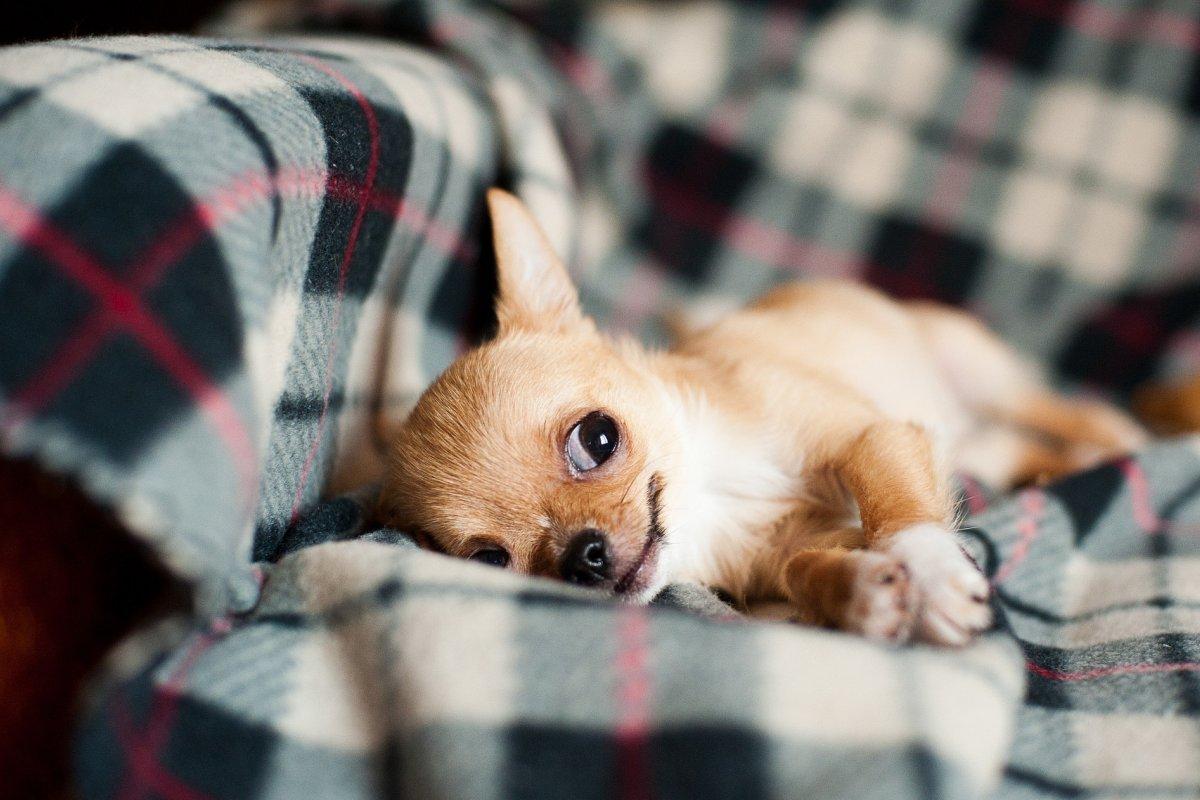 [Pets também sentem frio: confira dicas que fazem a diferença no bem-estar do animal]