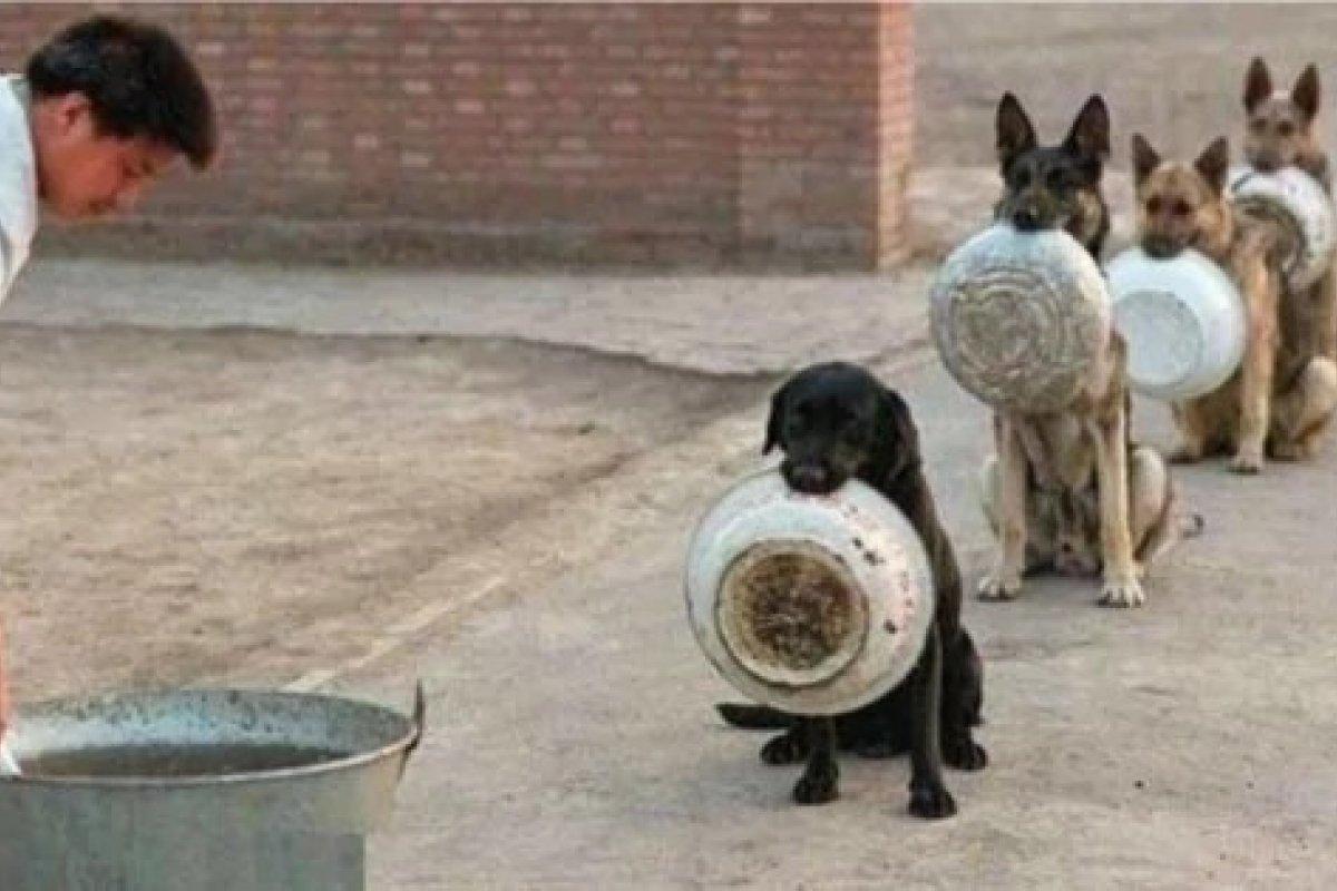 [Cães esperam em fila para serem alimentados, veja imagem]
