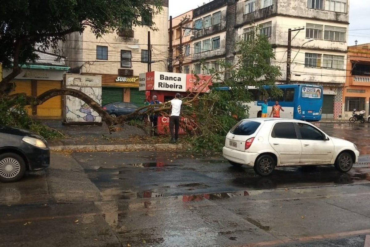[Parte de uma árvore cai em rua no bairro da Ribeira]