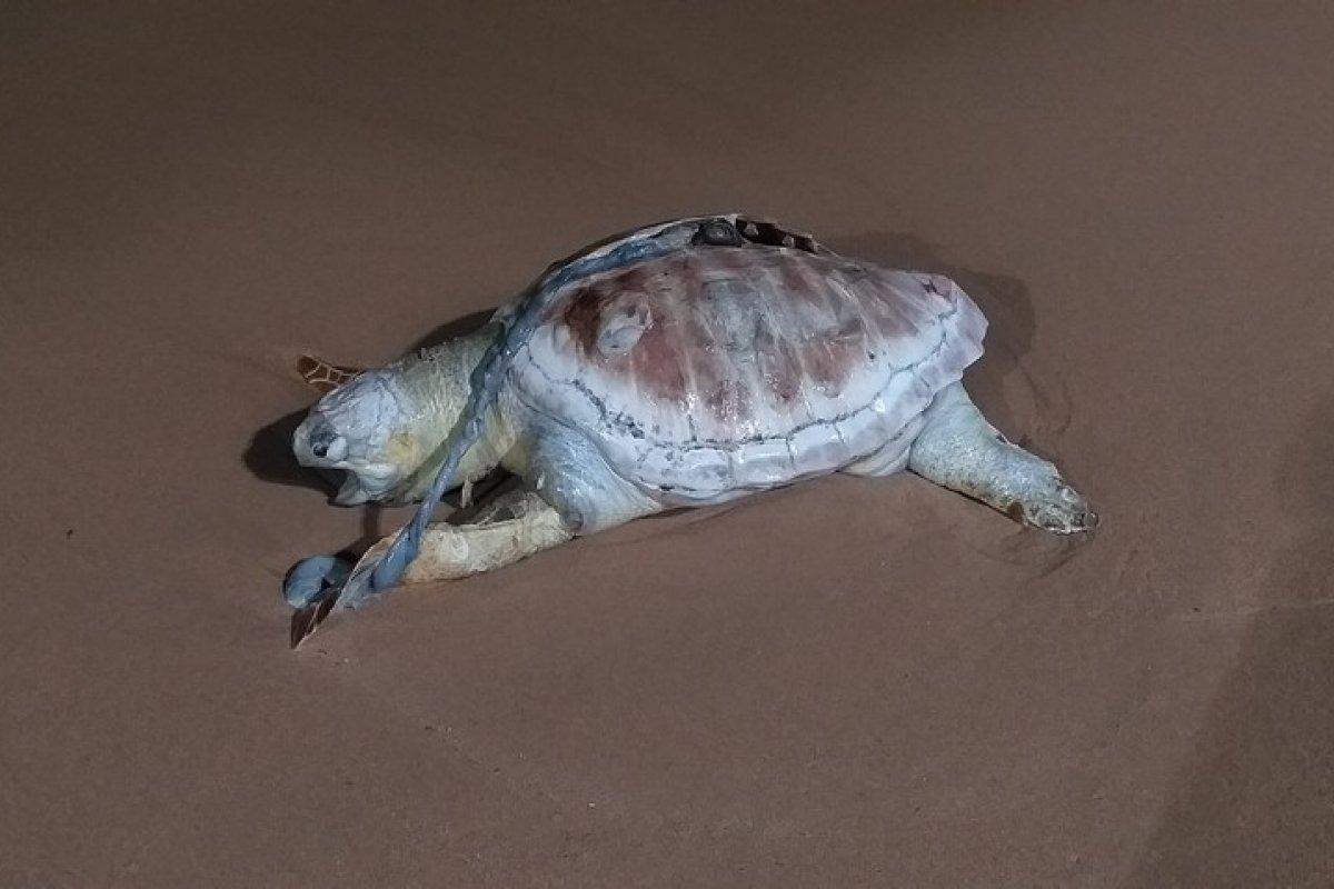 [Tartaruga marinha é encontrada morta em praia de Salvador]