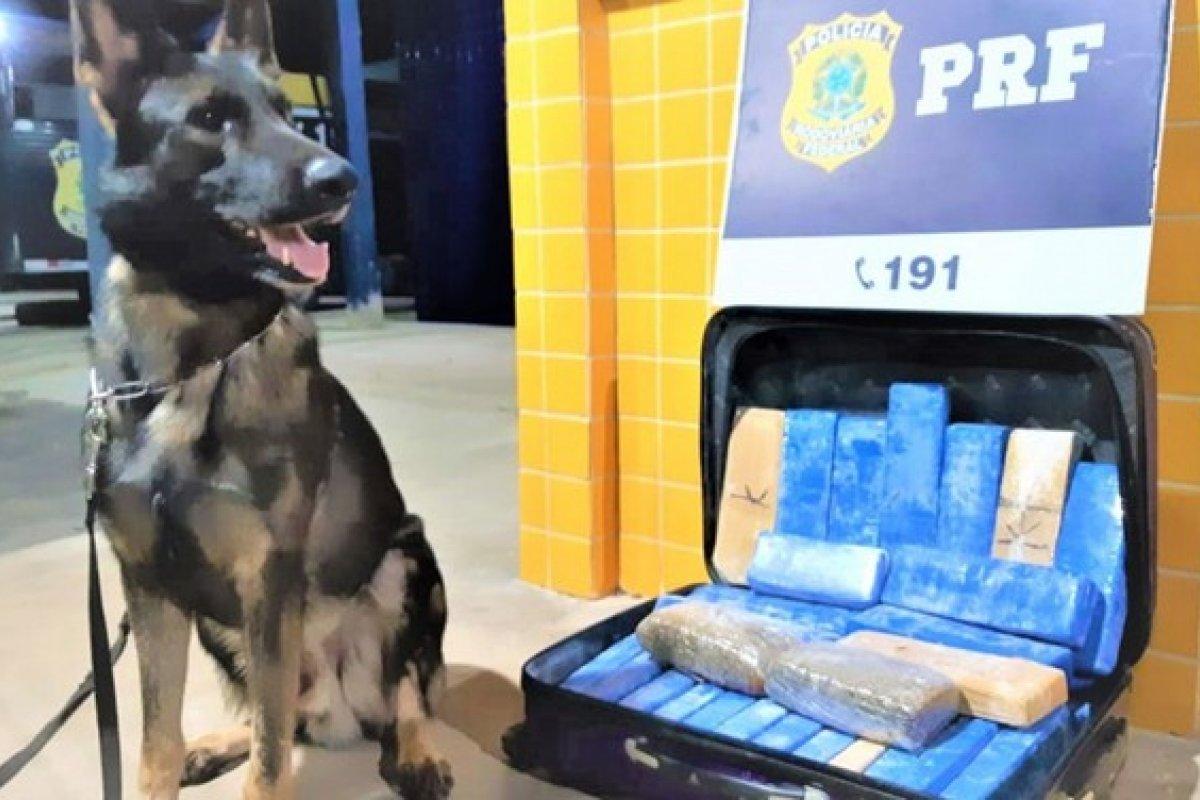 [Polícia apreende 22 kg de maconha em dois ônibus na BR-242, na Bahia]