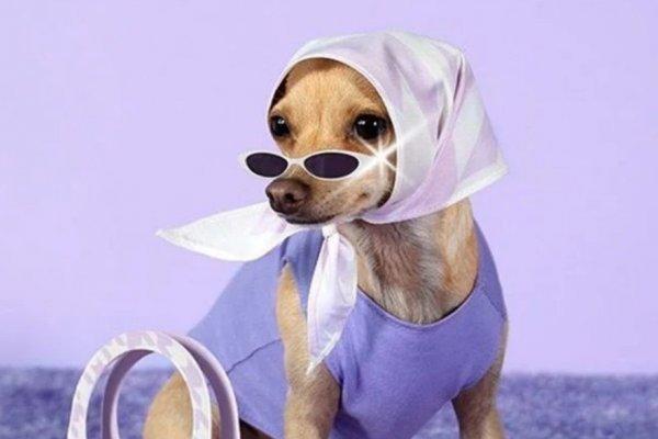 [Cachorrinha fashion que bomba na web, lança marca de acessórios para humanos]