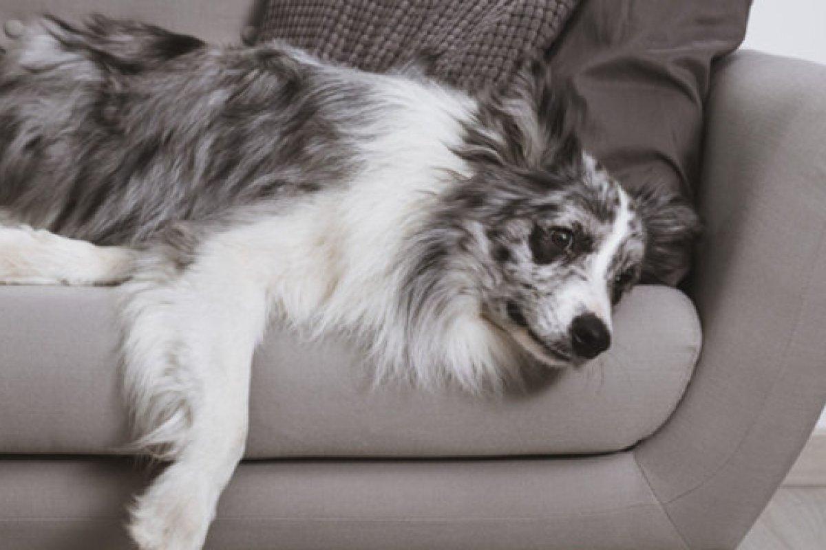[Pesquisa revela que Cachorros também sofrem de crise de meia idade]