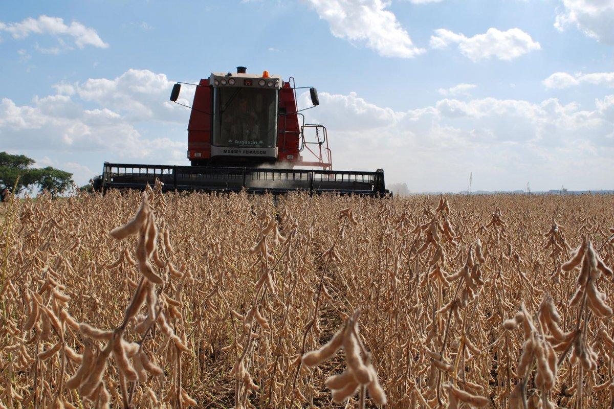 [Governo decide zerar tarifas de importação de milho e soja até 2021]