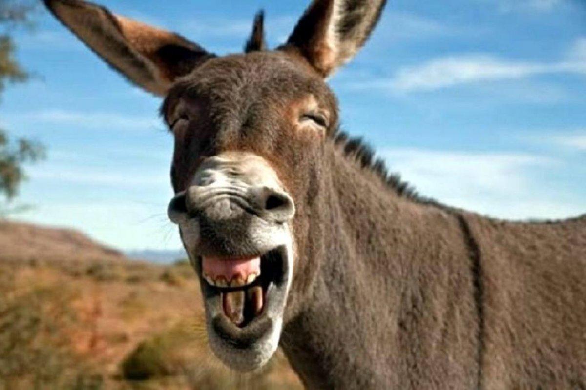 [E burro é quem? Burro é quem vota no DEM! Disse o 03...]