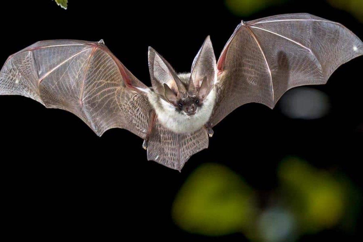 [Vírus similares a Covid-19 são detectado em morcegos no Camboja e no Japão]