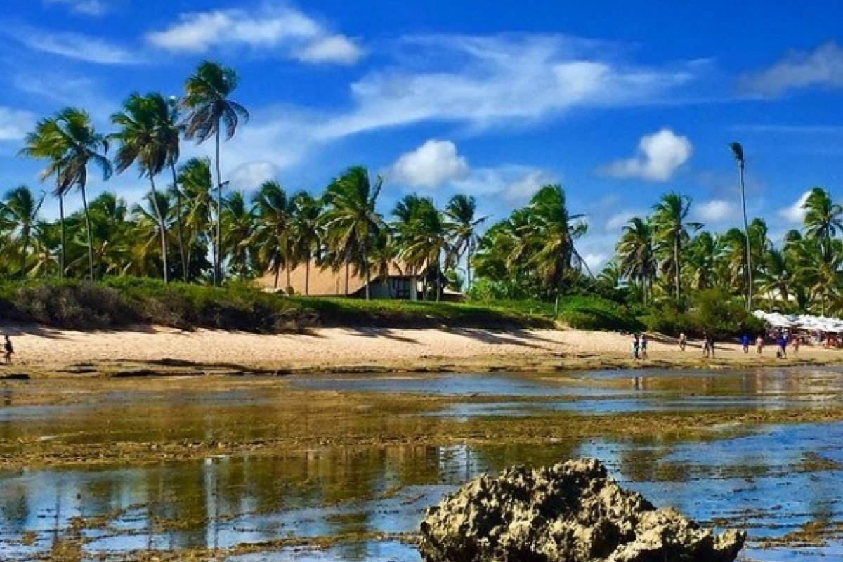 [Praia do Forte e Salvador vão se encontrar na 'Edição Especial 2020 do Tempero']
