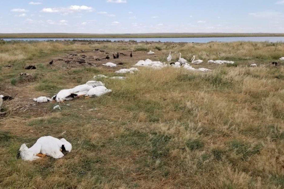 [Após tempestade de granizo, pássaros são encontrados mortos nos EUA ]