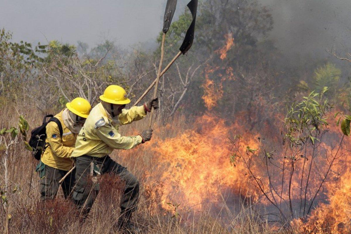 [Prevenir incêndios florestais ]