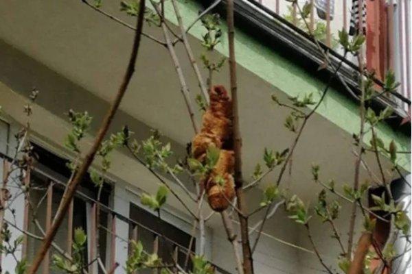 ['Criatura misteriosa' em árvore que assustou moradores era croissant]