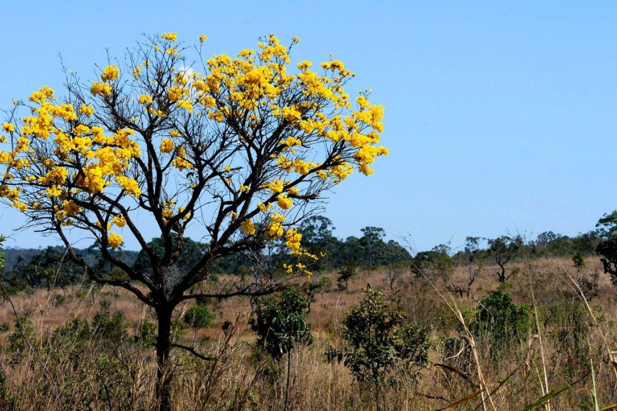 [Cúpula do Clima: Bolsonaro promete ações de preservação dos biomas brasileiros; confira mais sobre cada um deles]