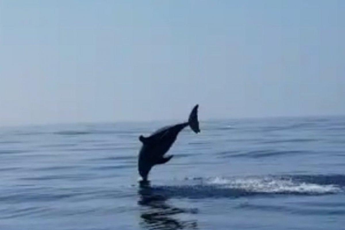 [Golfinho