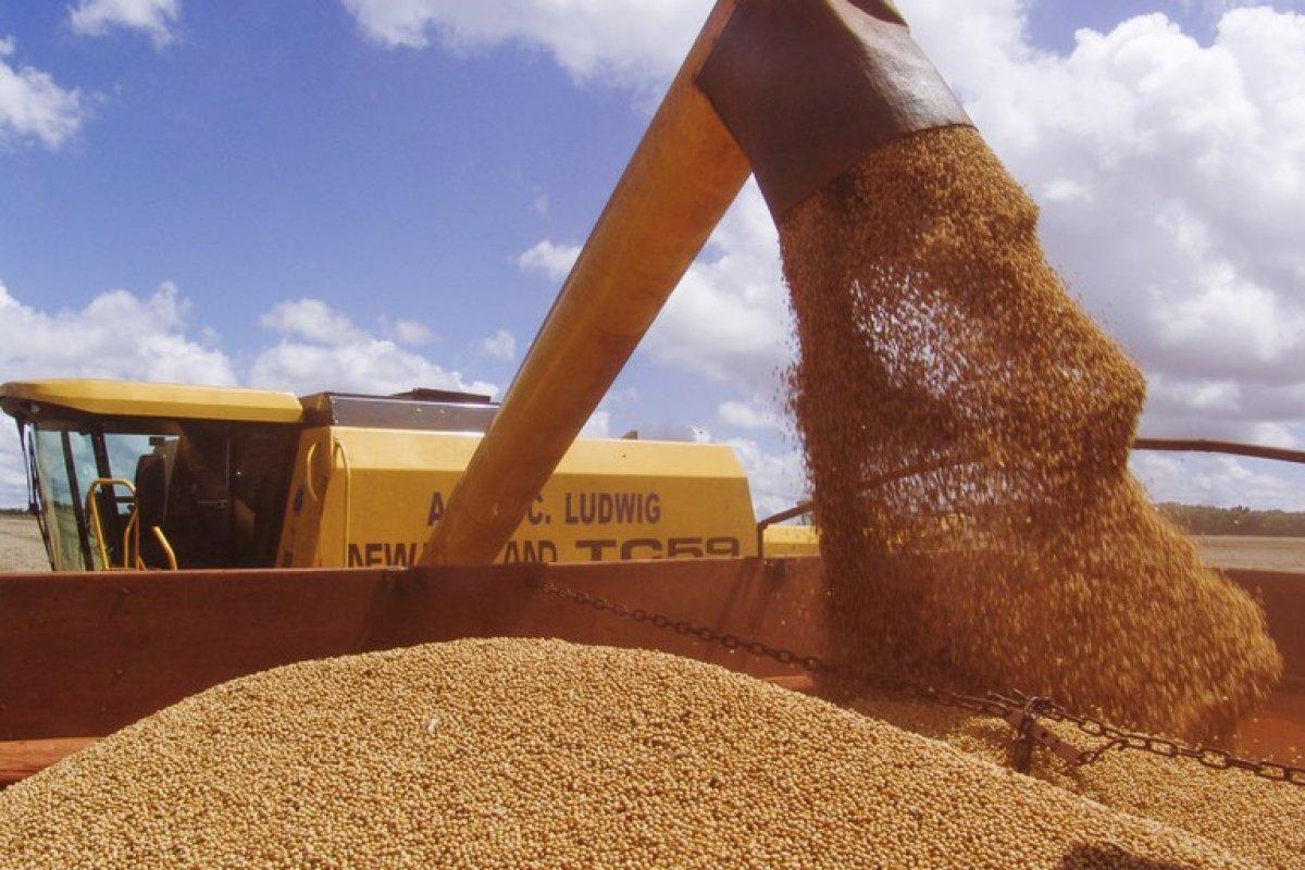 [Safra de grãos deve chegar a 262,13 milhões de toneladas]