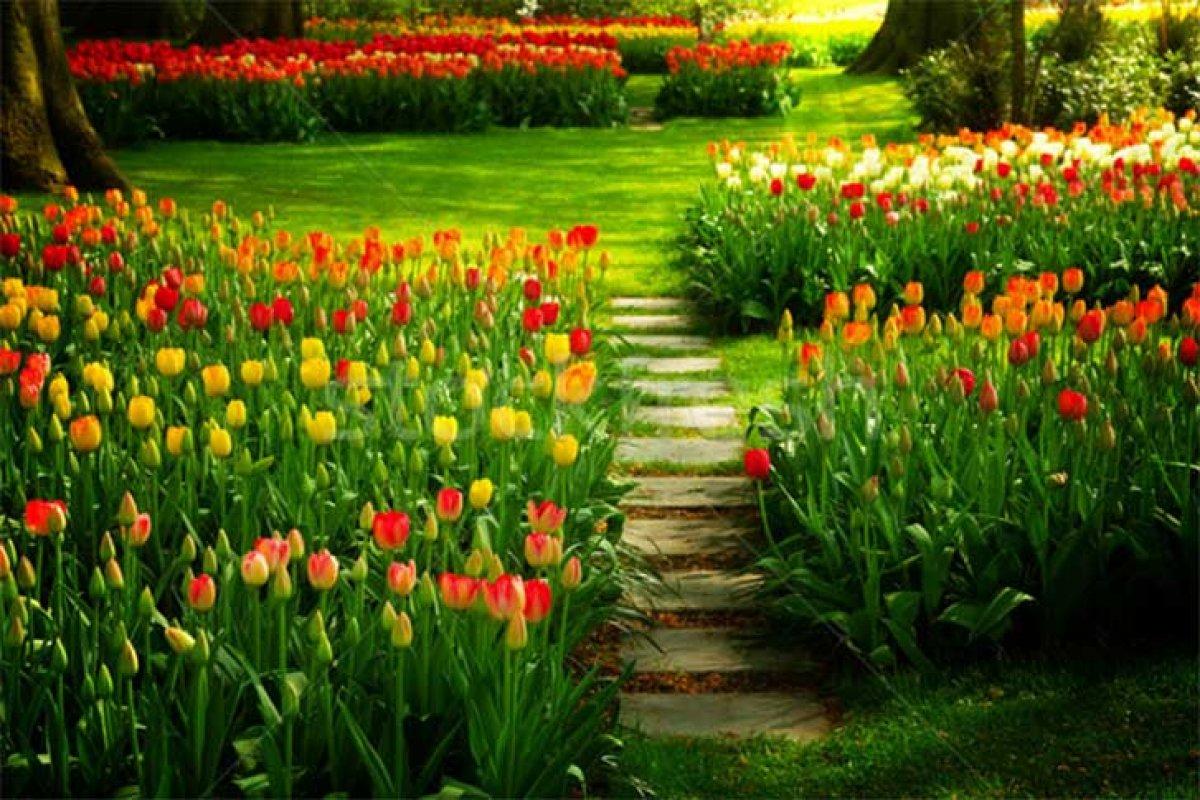 [10 dicas para cultivar um jardim lindo na Primavera]