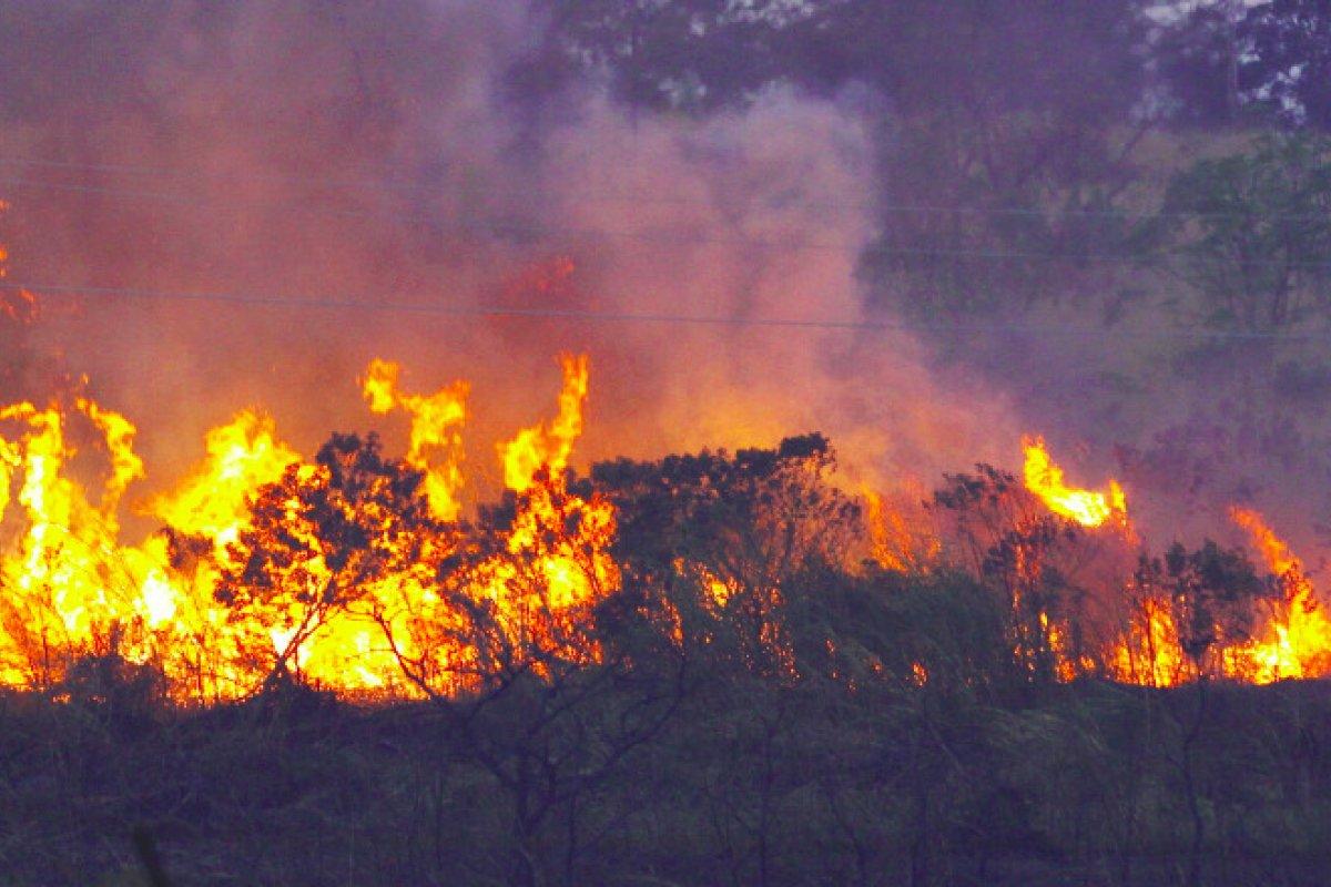 [ INPE: 1.935 queimadas foram registradas na Bahia este ano]