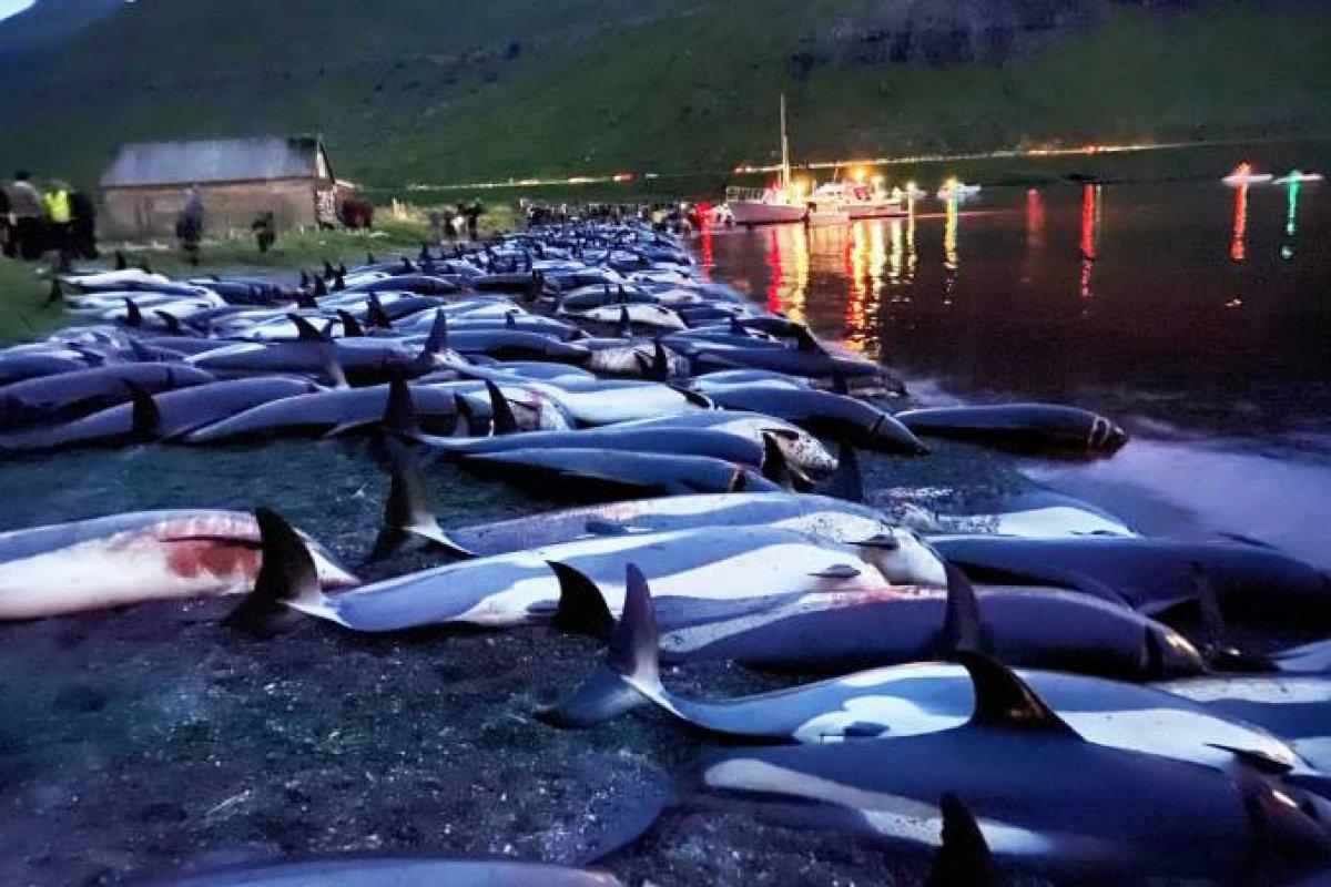 [Mais de 1.400 golfinhos são mortos em um único dia de caça nas Ilhas Faroé]