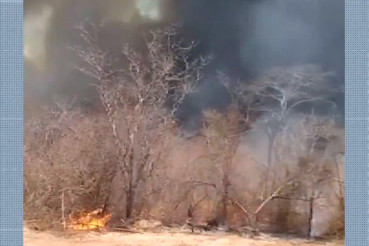 [Incêndios continuam e cresce área de vegetação destruída na região norte da Bahia]