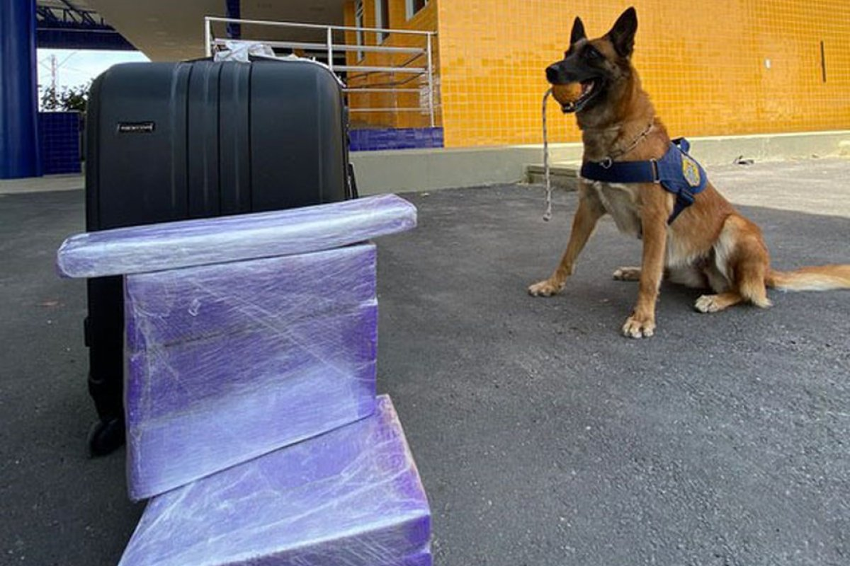 [Jovem é presa após cadela farejadora encontrar mais de 10 kg de maconha escondidos em bagagem, na BR-116]