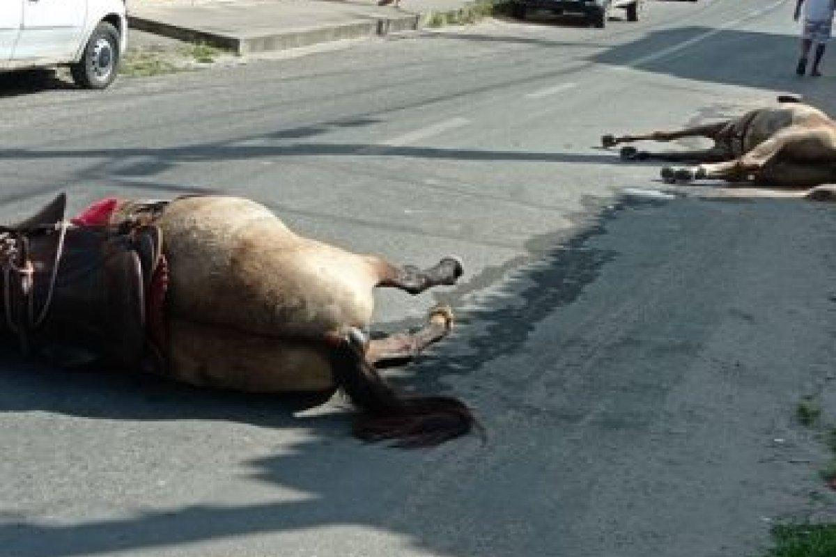 [Cavalo e éguas morrem após ataque a tiros em Feira de Santana]