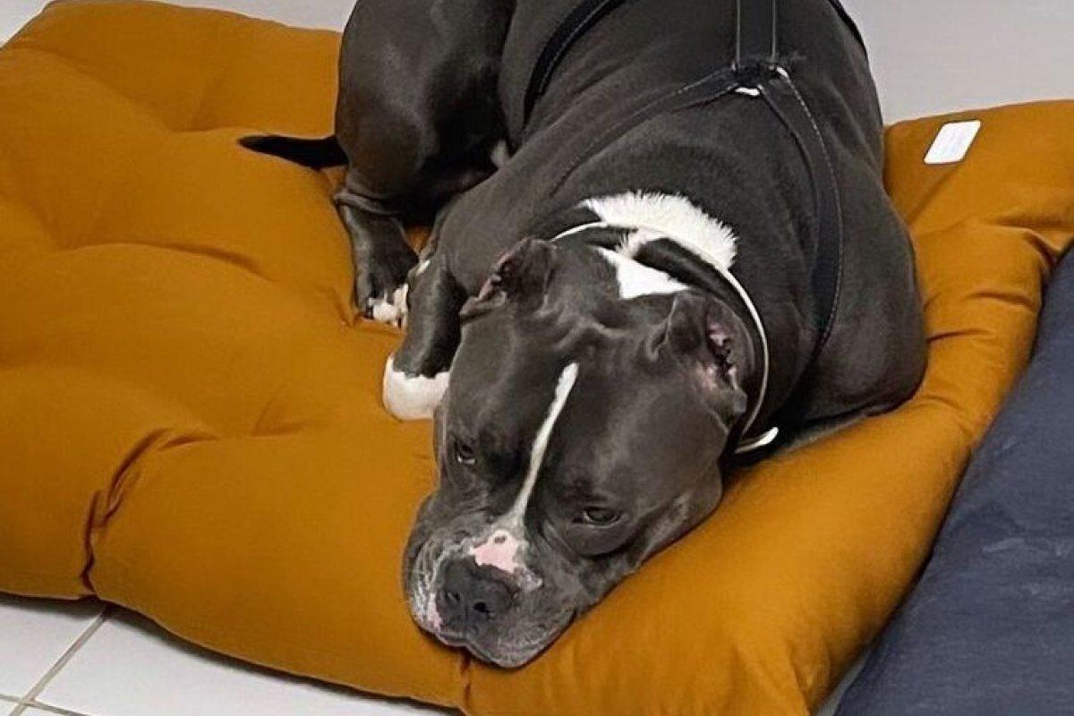 [Mulher acusa Latam por morte de cachorro no porão de voo entre Guarulhos e Aracaju]