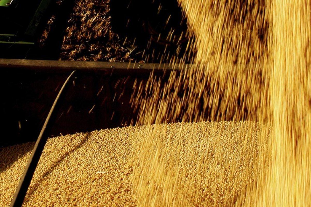 [Média diária de exportação de soja no Brasil tem alta de 70% na terceira semana de outubro ]